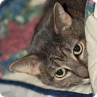 Adopt A Pet :: James - St.Ann, MO