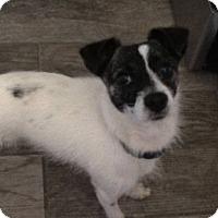 Adopt A Pet :: Jinx - North Brunswick, NJ