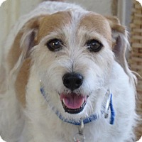 Adopt A Pet :: Mister - Scottsdale, AZ