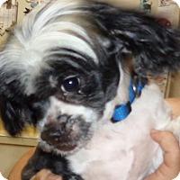 Adopt A Pet :: Pepe - Crump, TN