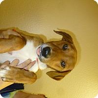 Adopt A Pet :: Hadley - Oviedo, FL
