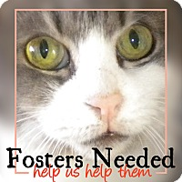 Adopt A Pet :: Fosters Needed - Brooklyn, NY
