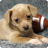 Adopt A Pet :: Carlito - Simi Valley, CA