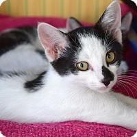 Adopt A Pet :: Diamond - Island Park, NY