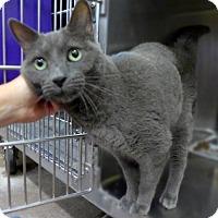 Adopt A Pet :: Ashes 33202595 - Westampton, NJ