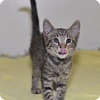 Adopt A Pet :: Mustang - Medina, OH