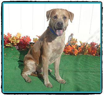 Labrador Retriever Mix Dog for adoption in Marietta, Georgia - BLUE
