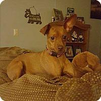 Miniature Pinscher Mix Dog for adoption in Richmond, Kentucky - Ruby
