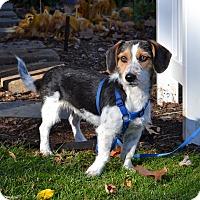 Adopt A Pet :: *Fletcher - PENDING - Westport, CT