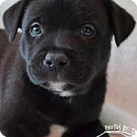 Adopt A Pet :: Cranberry - San Diego, CA