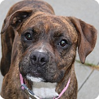 Adopt A Pet :: Allie - Council Bluffs, IA