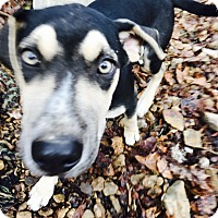 Adopt A Pet :: Jesse - Goodlettsville, TN