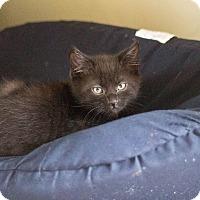 Adopt A Pet :: Felix - Morgantown, WV