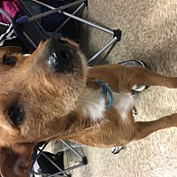 Adopt A Pet :: Rockyi-Road - Missouri City, TX