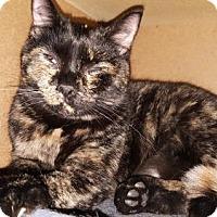 Adopt A Pet :: Ophelia - Denver, CO