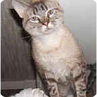 Adopt A Pet :: The Silver Bullet - Dallas, TX