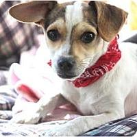 Adopt A Pet :: Holstein - san diego, CA