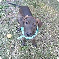 Adopt A Pet :: Bentley - Eden, NC