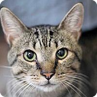 Adopt A Pet :: Lou - Chicago, IL