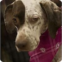 Adopt A Pet :: Stormy - Arlington, TX