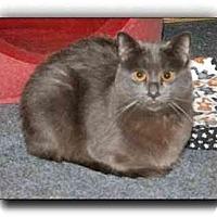 Adopt A Pet :: Duffy - Howell, MI
