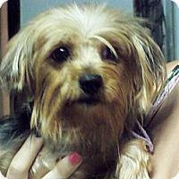 Adopt A Pet :: Andrea - Lorain, OH