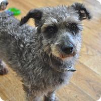 Adopt A Pet :: George - Tumwater, WA