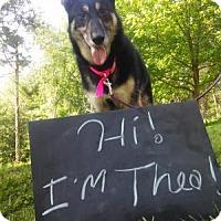 Adopt A Pet :: Thea - Louisville, KY