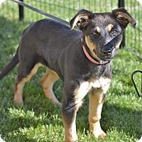 Adopt A Pet :: Greta - Meridian, ID