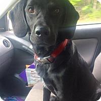 Adopt A Pet :: Trey - Boston, MA