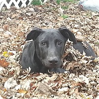 Adopt A Pet :: Sophie - Columbus, IN