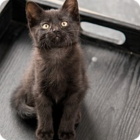 Adopt A Pet :: Newhart - Chicago, IL