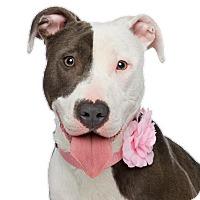 Adopt A Pet :: Bambi - Los Angeles, CA