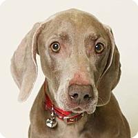 Adopt A Pet :: Abby - Birmingham, AL