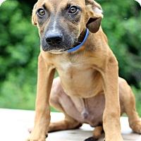 Adopt A Pet :: Jake - Waldorf, MD