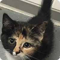 Adopt A Pet :: Kya - Budd Lake, NJ