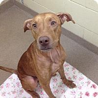 Adopt A Pet :: 1-3 Coco - Triadelphia, WV