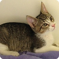 Adopt A Pet :: Simba - Putnam Hall, FL
