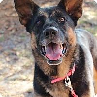 Adopt A Pet :: Lexi - Cape Coral, FL