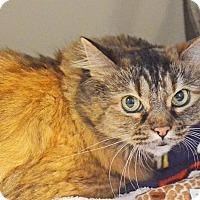 Adopt A Pet :: Stretchie - Lincoln, NE