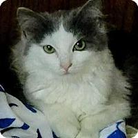 Adopt A Pet :: Hughes - Charlotte, NC