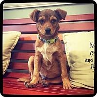 Adopt A Pet :: Ishmael - Grand Bay, AL