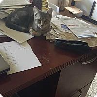 Adopt A Pet :: Luca - South Bend, IN