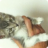 Adopt A Pet :: Camden - Santa Monica, CA