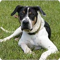 Adopt A Pet :: Trapper - Mocksville, NC