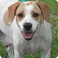 Adopt A Pet :: Abaleen - Pawling, NY