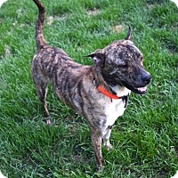 Adopt A Pet :: Barney - Ijamsville, MD