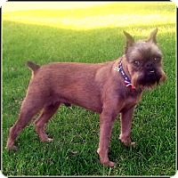 Adopt A Pet :: CHANCE - ADOPTION PENDING - Seymour, MO