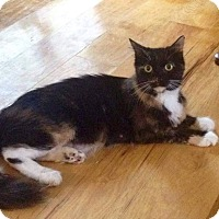 Adopt A Pet :: Boo - Putnam, CT