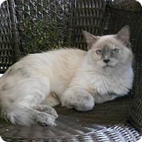 Adopt A Pet :: Isis - Huntsville, AL
